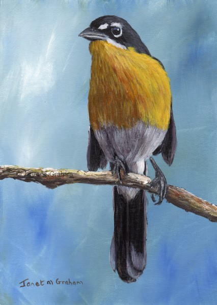 """Yellow Breasted Chat"" original fine art by Janet Graham"