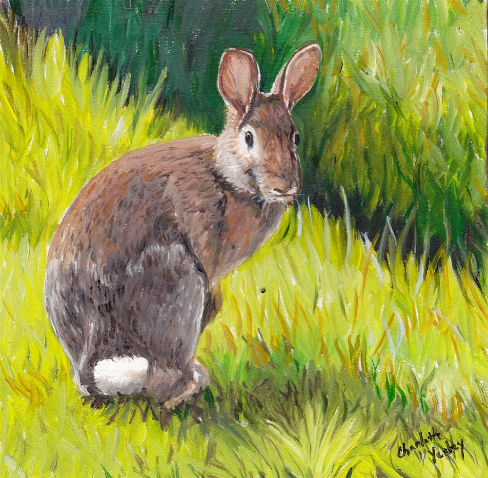"""Cottontail"" original fine art by Charlotte Yealey"