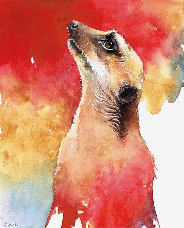 """""""Meerkat"""" original fine art by Annabel Chance"""