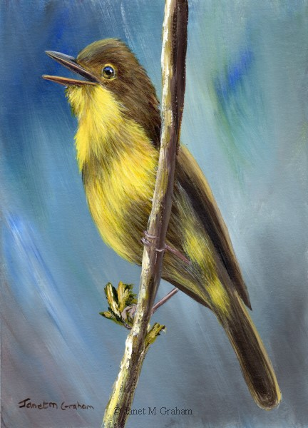 """Melodious Warbler"" original fine art by Janet Graham"