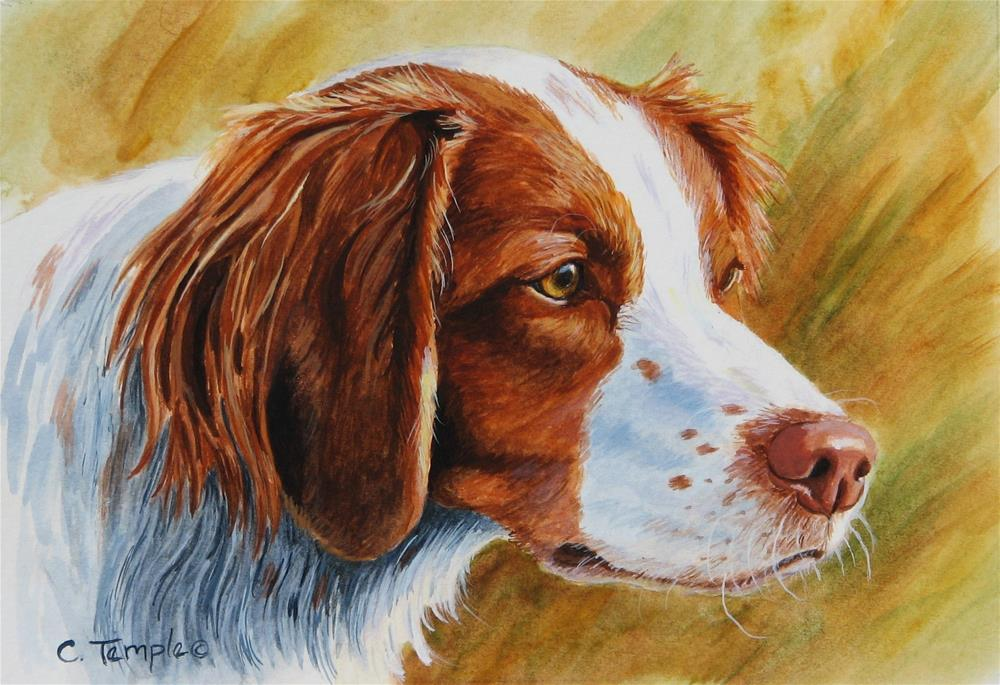 """""""Locked On - Brittany"""" original fine art by Catherine Temple"""