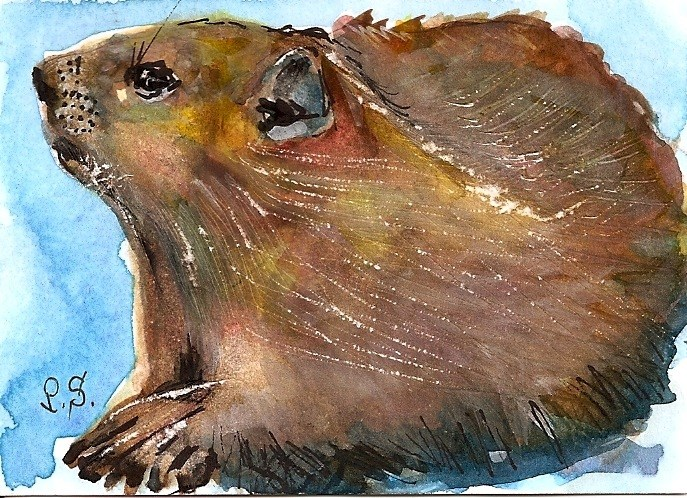"""ACEO In Honor of Groundhog Day Feb 2 Rodent Animal Art by Penny StewArt"" original fine art by Penny Lee StewArt"