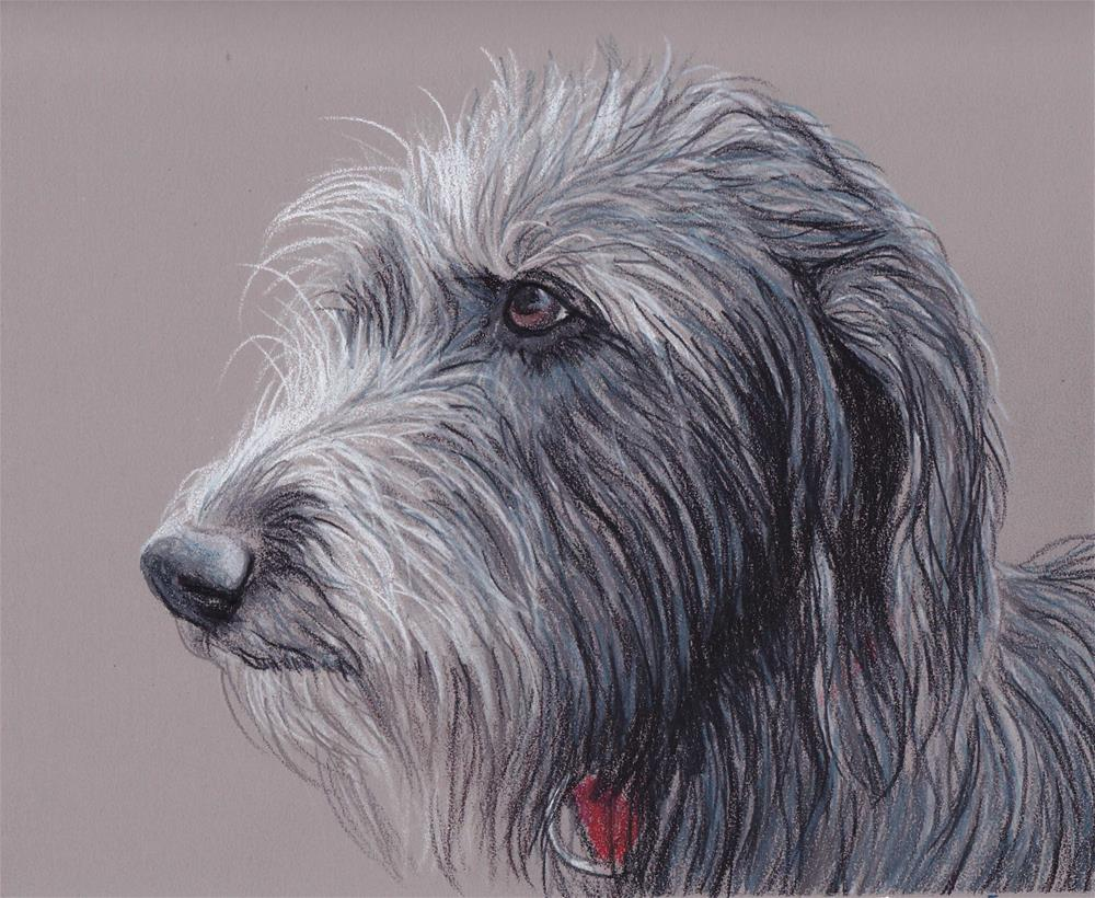 """""""Scottish Deerhound"""" original fine art by Charlotte Yealey"""