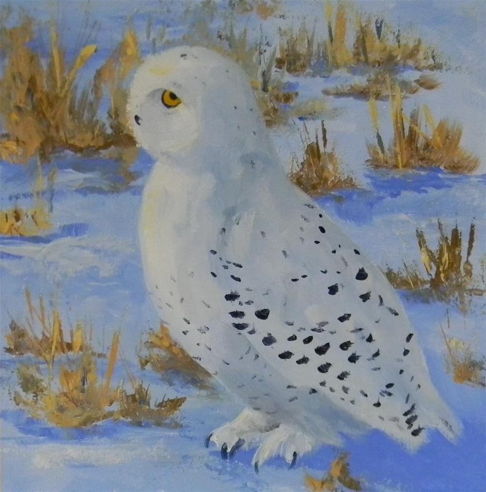 """""""Snowy Owl"""" original fine art by Annemiek Haralson"""