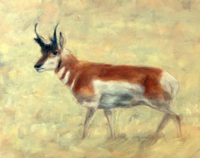 """""""Watchful Eye"""" original fine art by Carol Zirkle"""