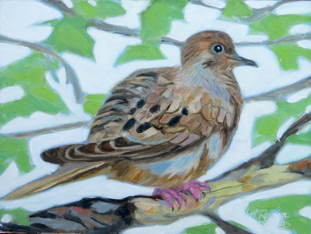 """Mourning Dove"" original fine art by Rhett Regina Owings"