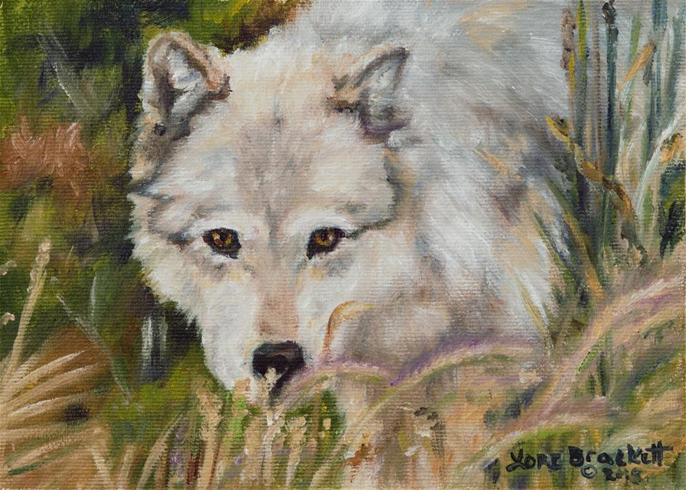 """Wolf Among Foxtails"" original fine art by Lori Brackett"