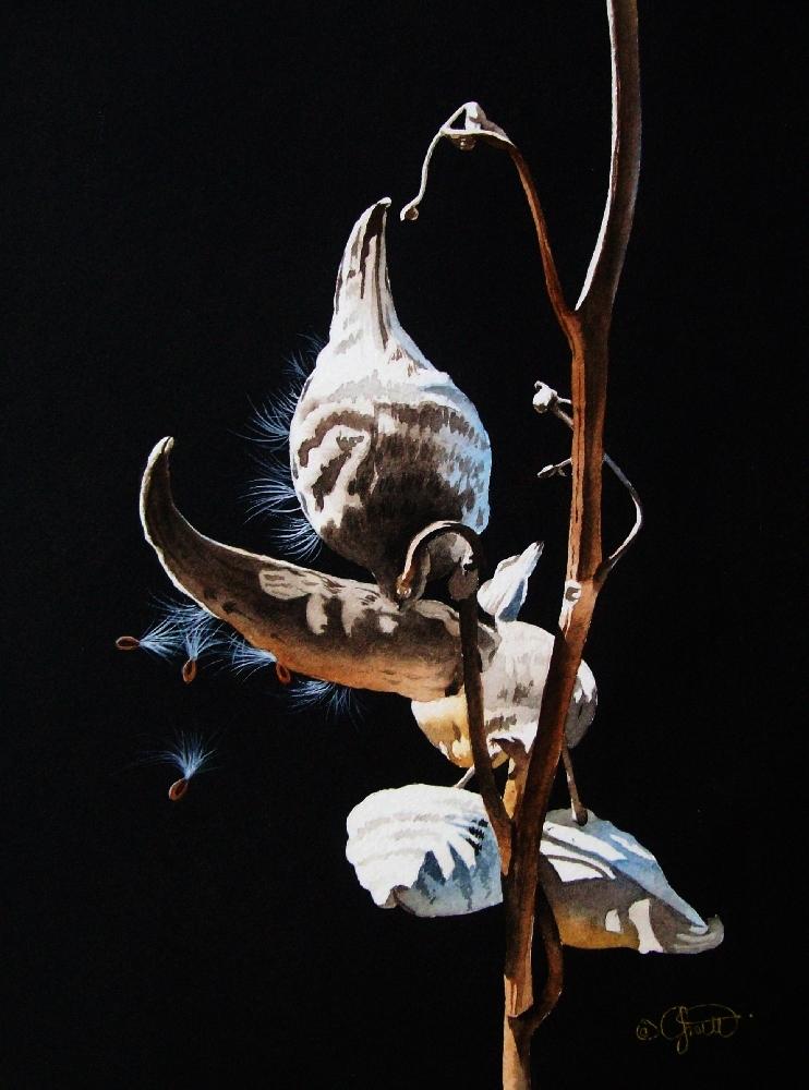 """""""Milk Weed Pod"""" original fine art by Jacqueline Gnott, TWSA, WHS"""