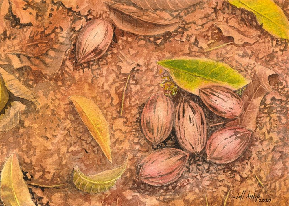 """Fallen Pecans"" original fine art by Jeff Atnip"