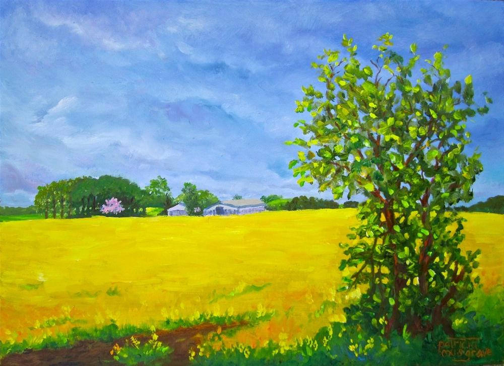"""""""Yellow Fields"""" original fine art by Patricia Musgrave"""