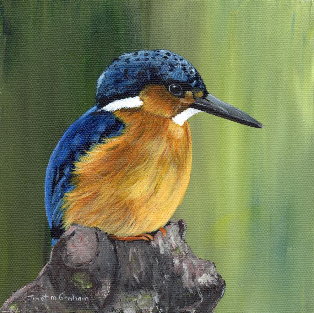 """Malagasy Kingfisher"" original fine art by Janet Graham"