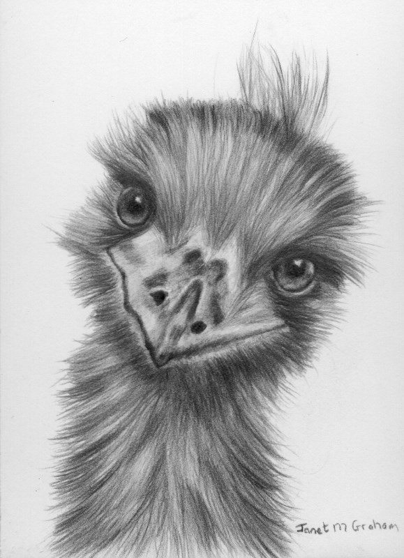 """Emu ACEO"" original fine art by Janet Graham"