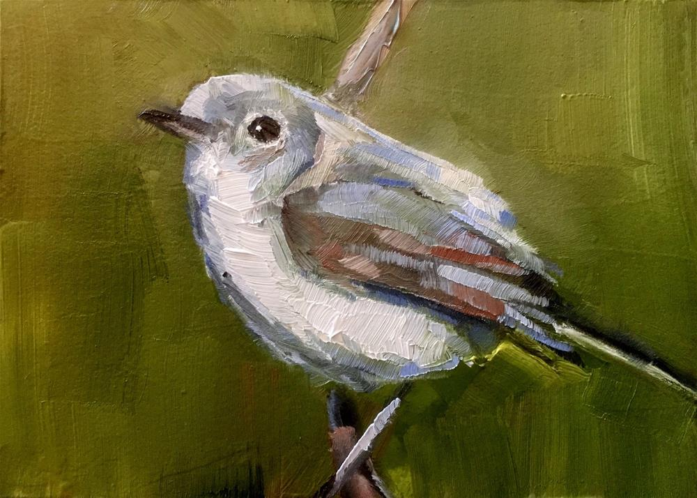 """Gnatcatcher"" original fine art by Gary Bruton"