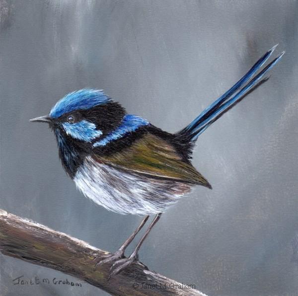 """Superb Fairy Wren No 11"" original fine art by Janet Graham"