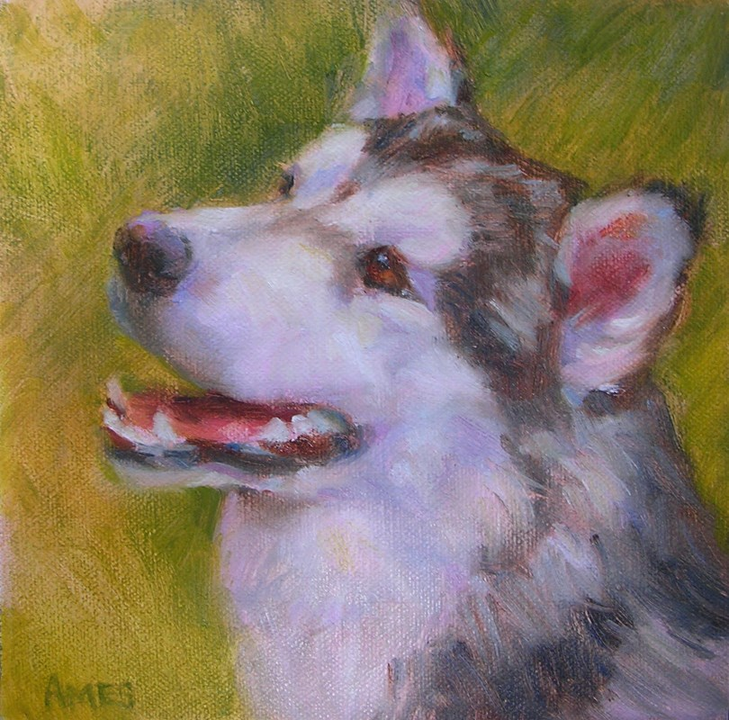 """""""Sled Dog"""" original fine art by Debra Ames"""