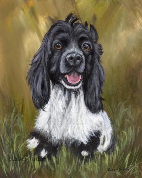 """""""Cocker Spaniel Puppy"""" original fine art by Janet Graham"""