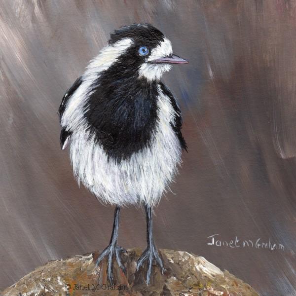"""Magpie Lark (Peewee) No 2"" original fine art by Janet Graham"
