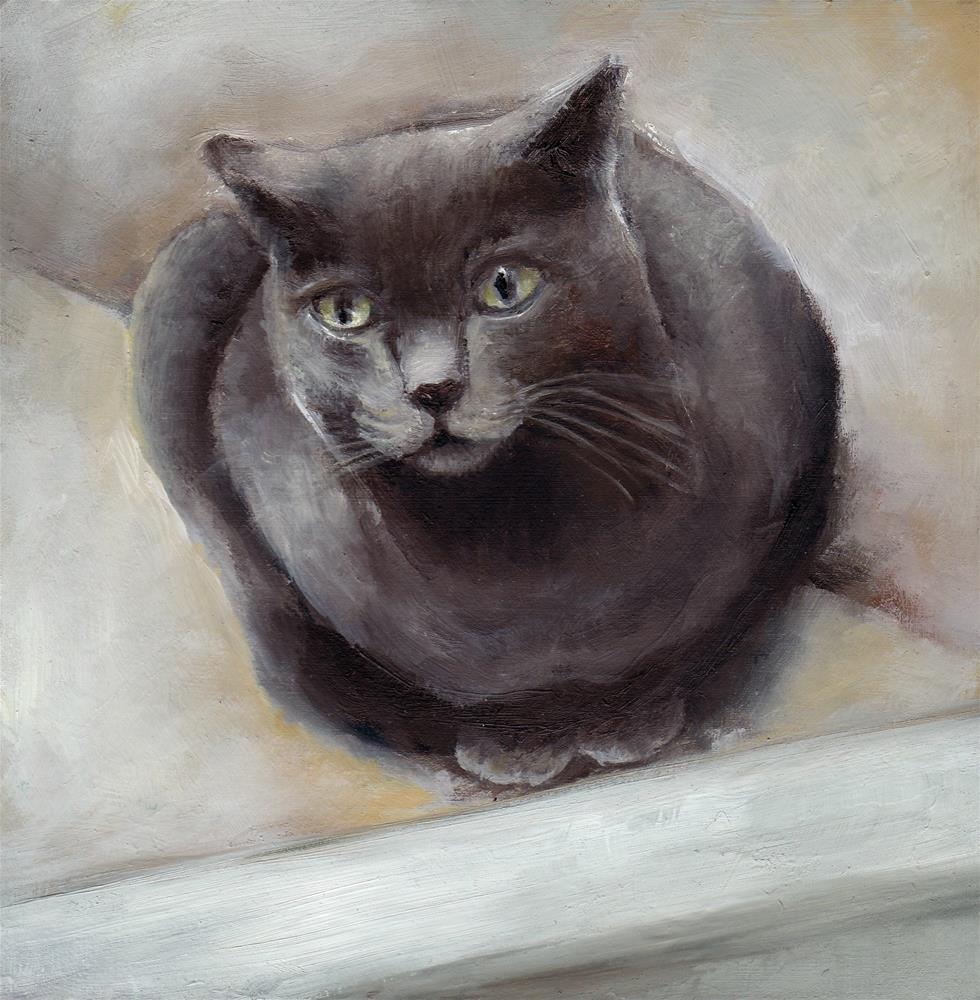 """""""Chat Provençal"""" original fine art by Anne Ducrot"""