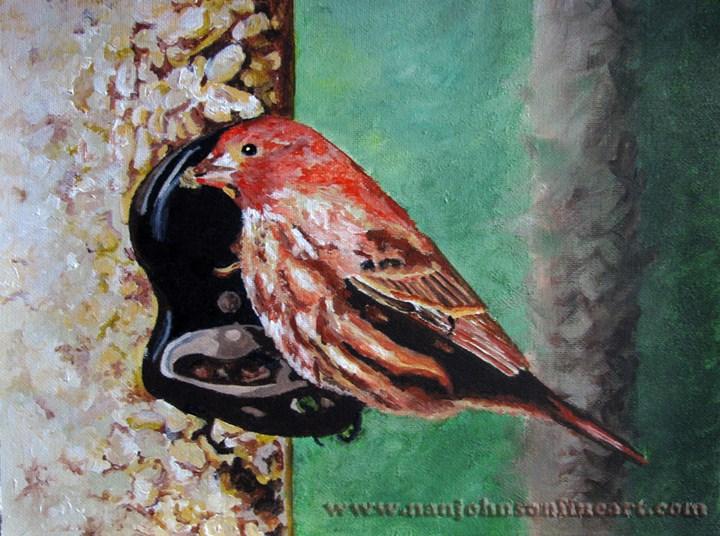 """""""House Finch"""" original fine art by Nan Johnson"""