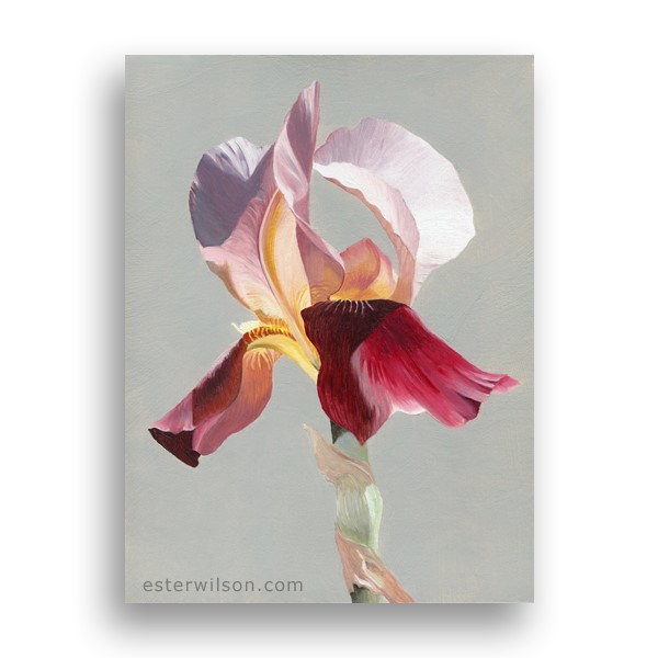 """Iris"" original fine art by Ester Wilson"