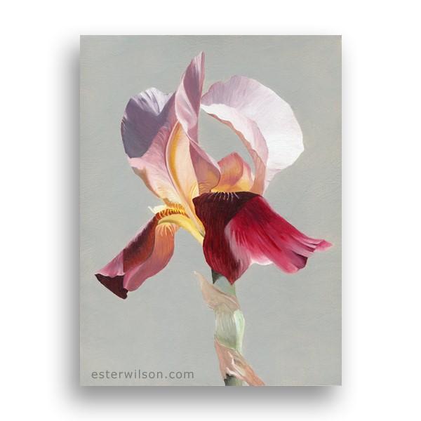 """Iris"" original fine art by Ester Wilson"