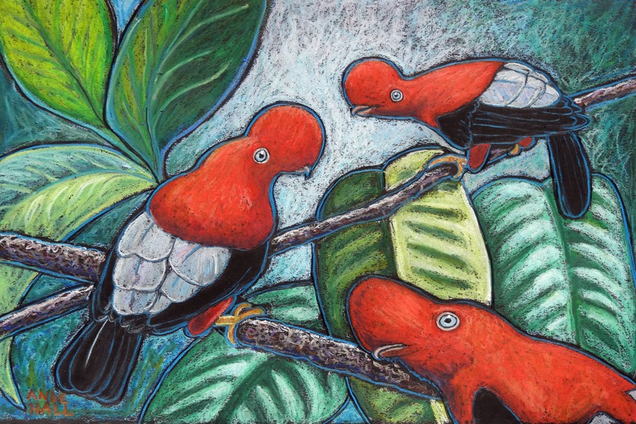 """Cock-of-the-Rock: Peruvian National Bird"" original fine art by Ande Hall"