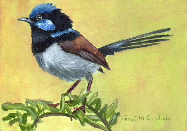 """Superb Fairy Wren ACEO"" original fine art by Janet Graham"