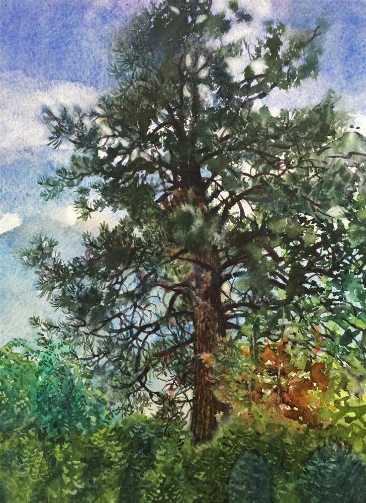 """""""Lone Pine"""" original fine art by Nicoletta Baumeister"""
