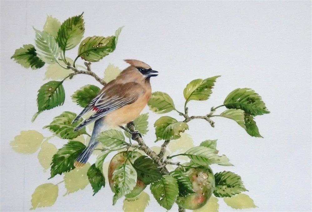 """""""Cedar Waxwing in apple tree"""" original fine art by Jean Pierre DeBernay"""