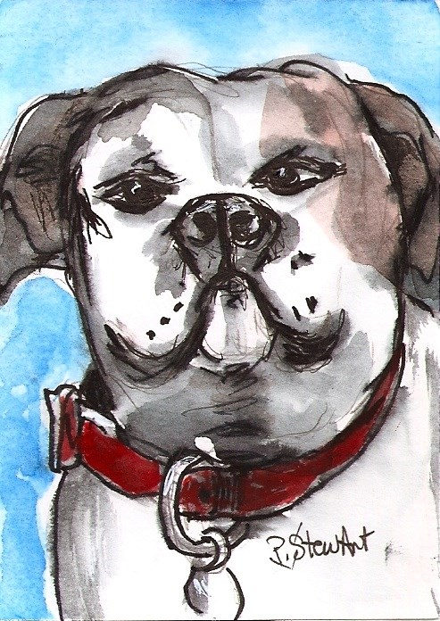 """""""ACEO Painting White Proud Boxer Dog Red Collar illustration Pet Penny StewArt"""" original fine art by Penny Lee StewArt"""