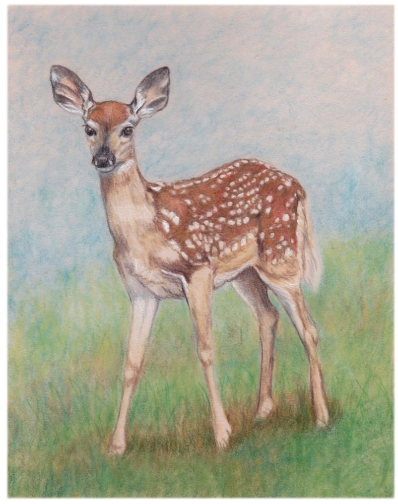 """""""All Ears"""" original fine art by Charlotte Yealey"""