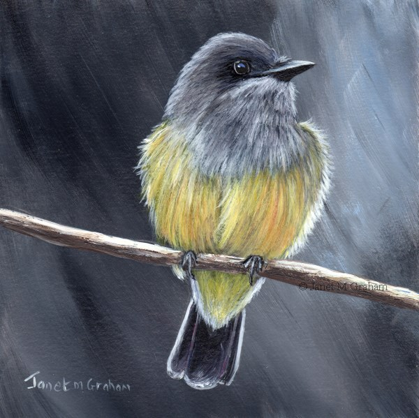 """Cassin's Kingbird"" original fine art by Janet Graham"