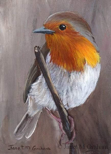 """Robin no 2 ACEO"" original fine art by Janet Graham"