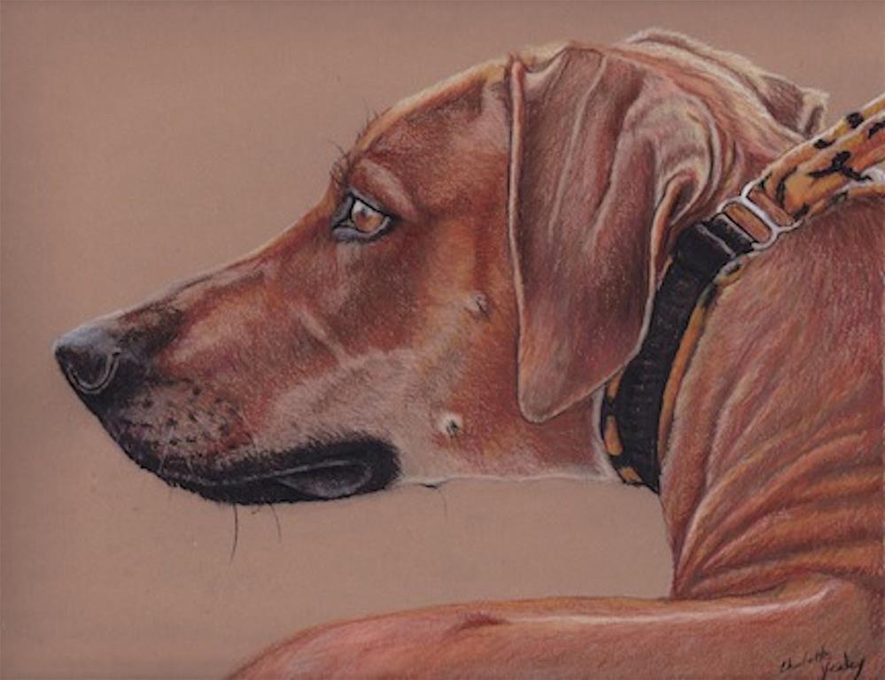 """Rhodesian Ridgeback"" original fine art by Charlotte Yealey"