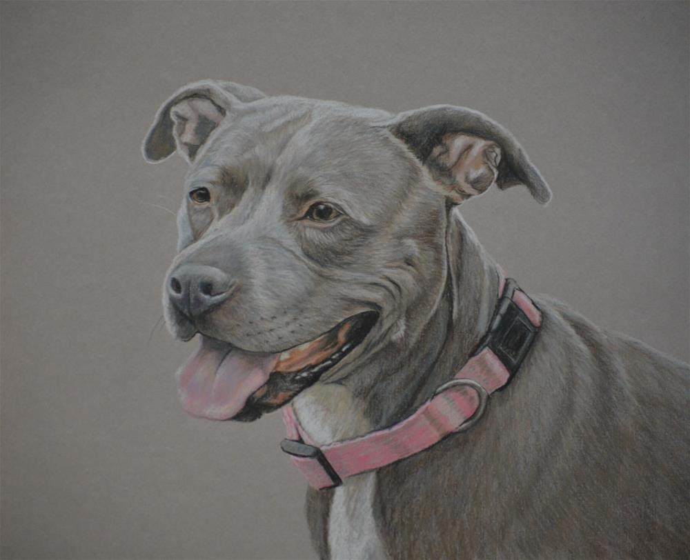 """American Staffordshire Terrier"" original fine art by Charlotte Yealey"