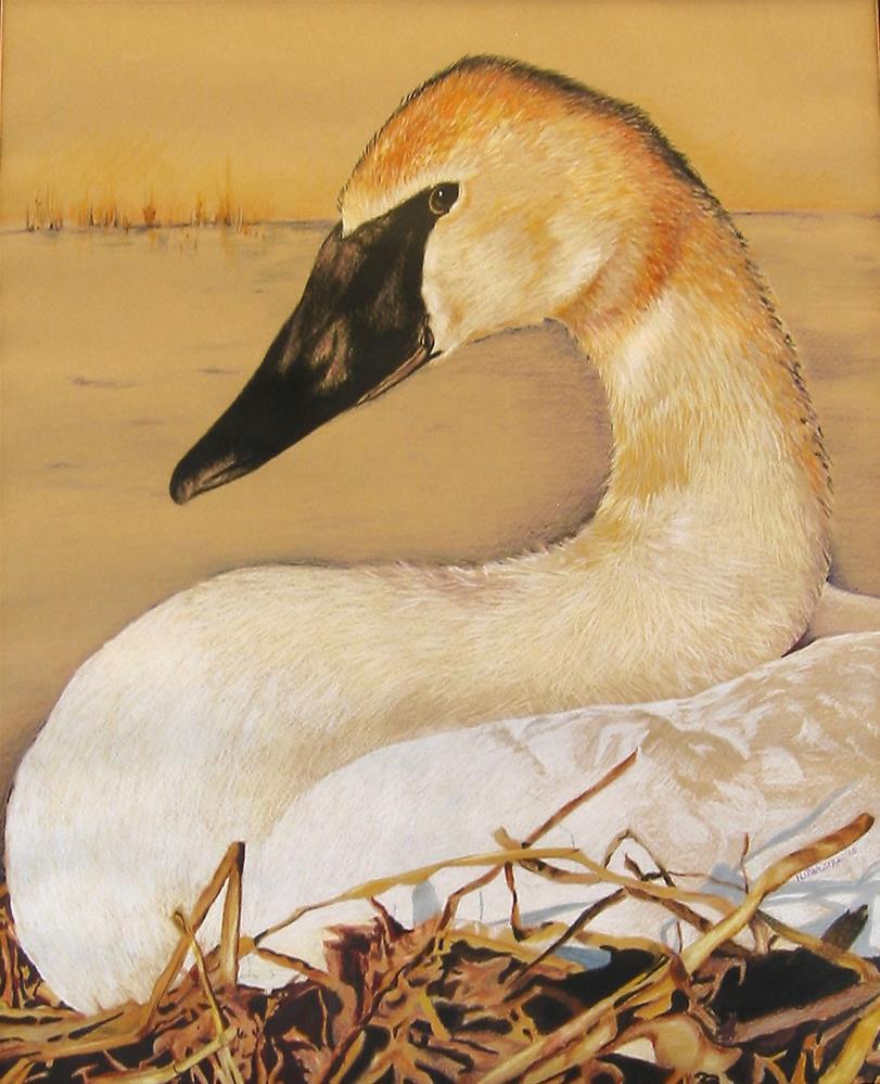 """Trumpeter Swan"" original fine art by Nancy Parsons"