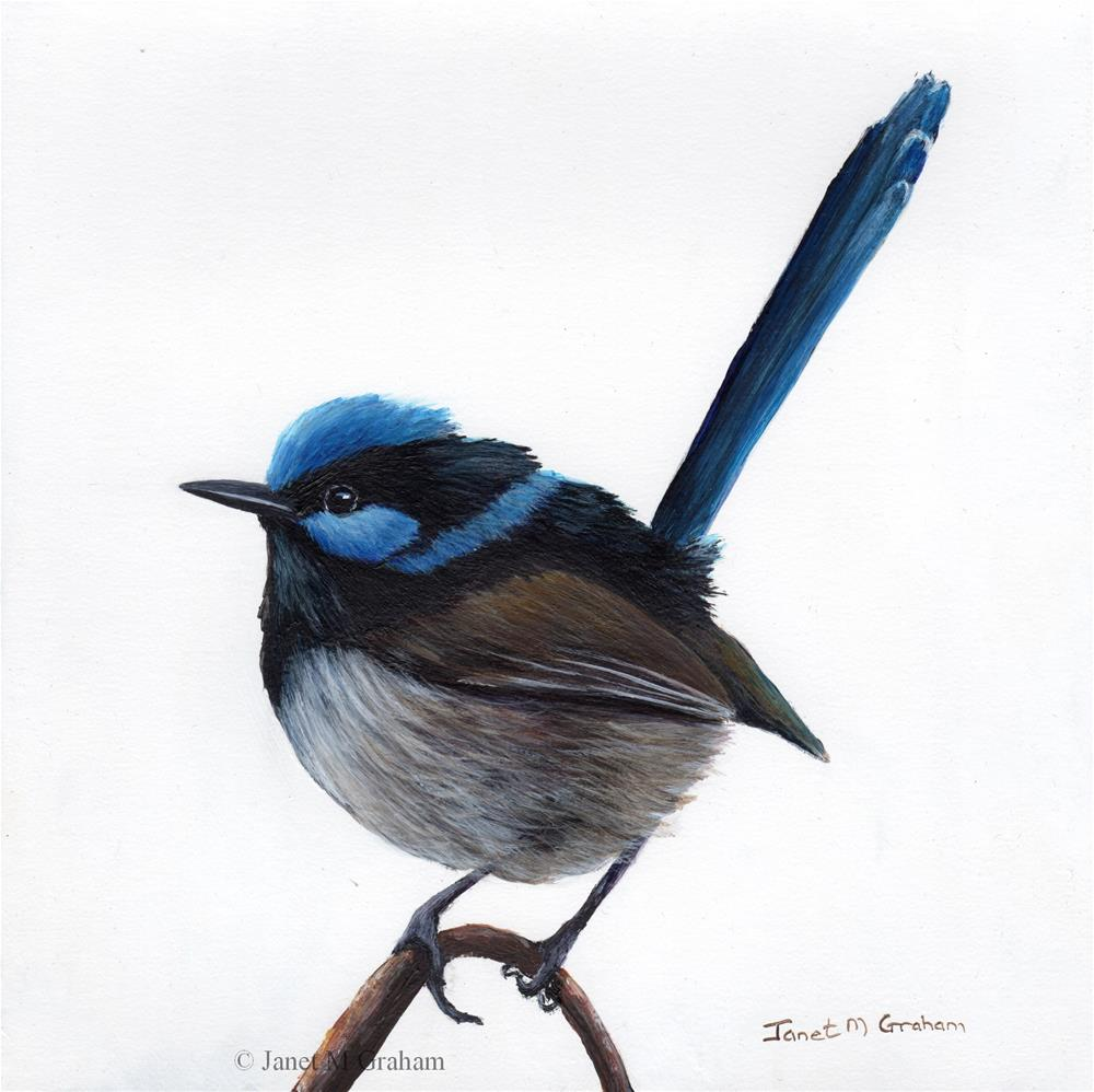 """Superb Fairy Wren No 10"" original fine art by Janet Graham"