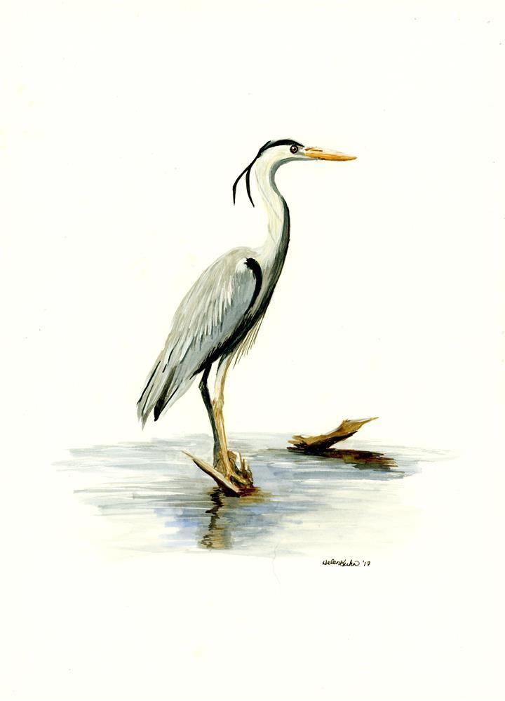 """Blue Heron"" original fine art by Helen Kuhn"