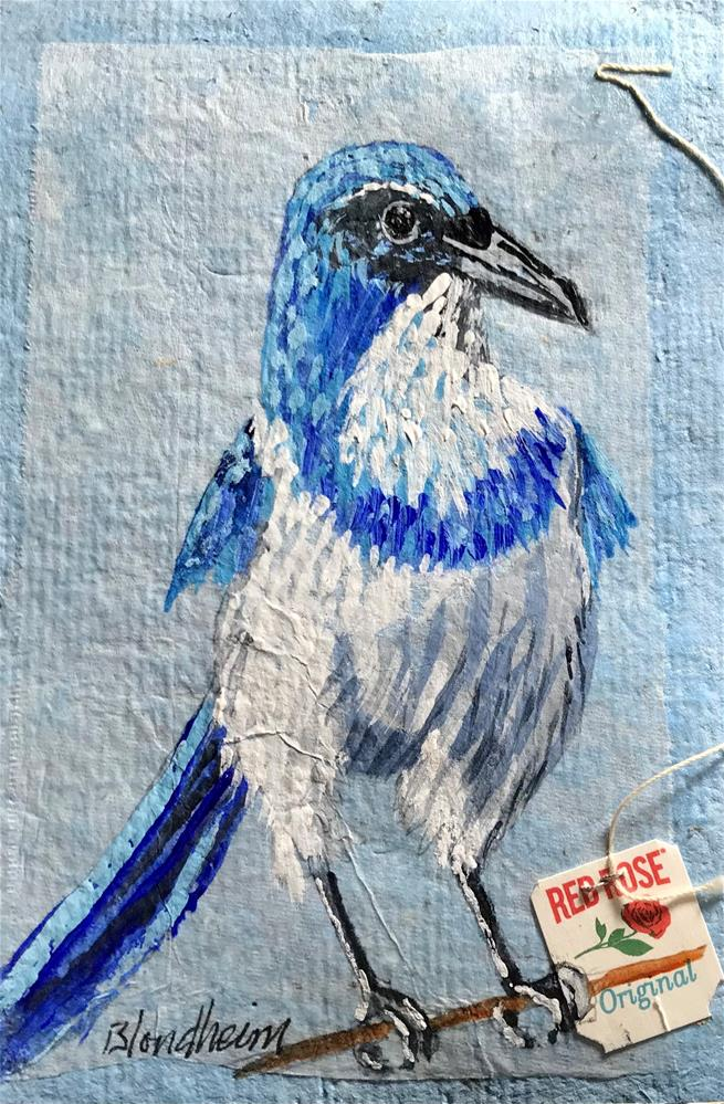"""Scrub Jay"" original fine art by Linda Blondheim"