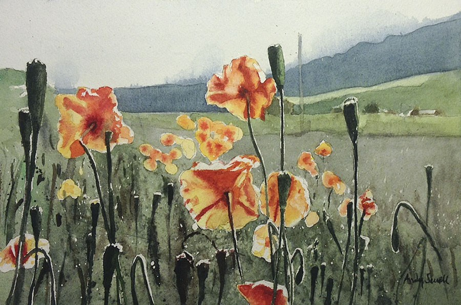"""""""Field of Poppies"""" original fine art by Andy Sewell"""