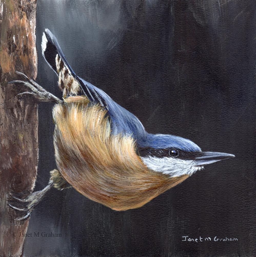 """Nuthatch No 2"" original fine art by Janet Graham"