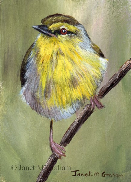 """Stripe Throated Jery ACEO"" original fine art by Janet Graham"