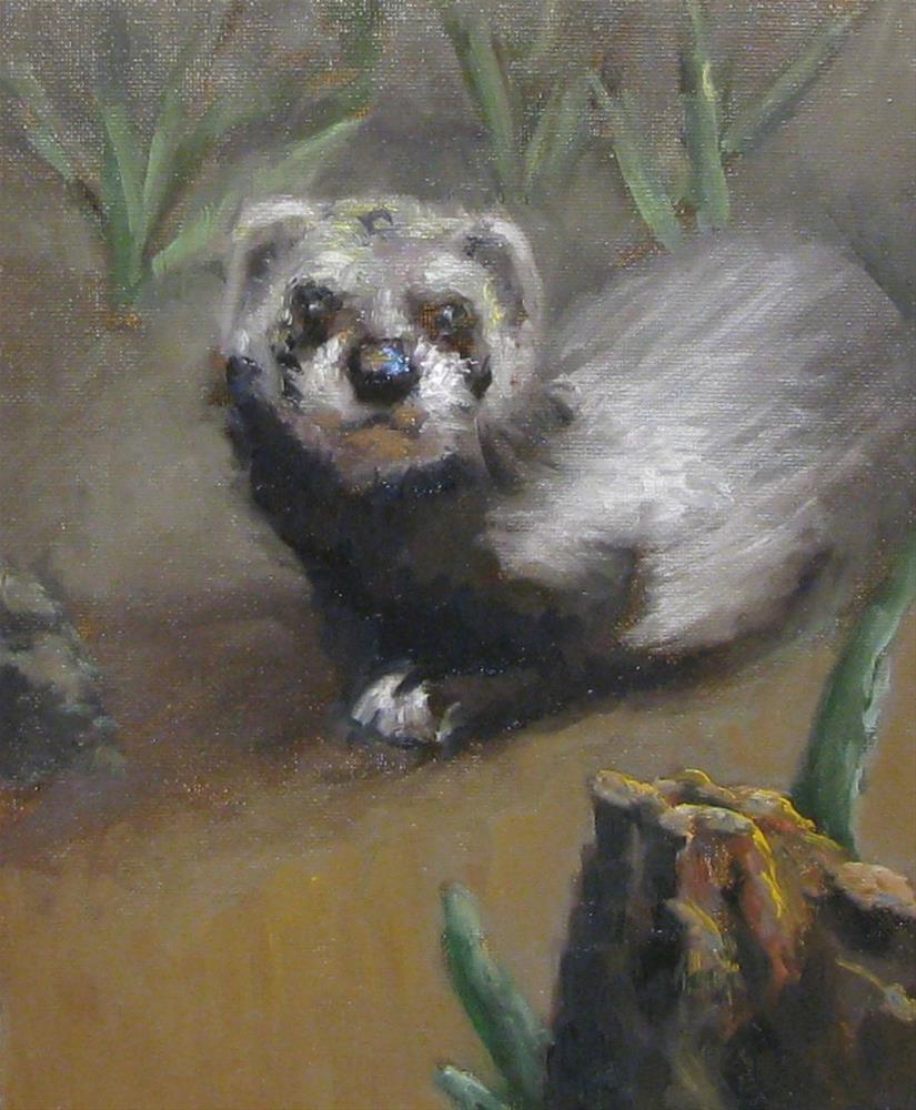 """""""friendly ferret"""" original fine art by tom dawson"""