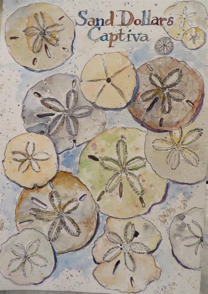 """628 Sand Dollars"" original fine art by Diane Campion"