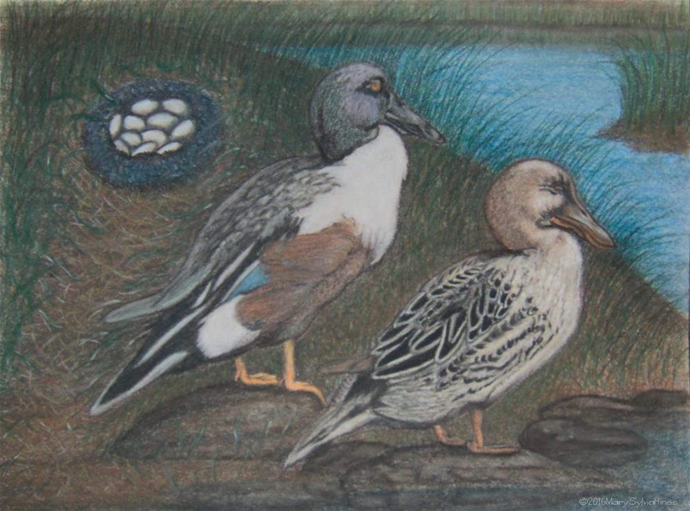 """Northern Shovelers 1"" original fine art by Mary Sylvia Hines"
