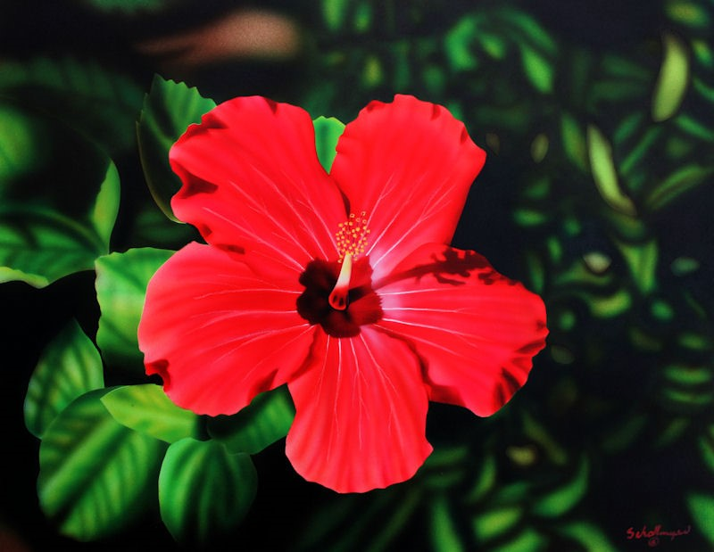 """Red Hibiscus"" original fine art by Fred Schollmeyer"