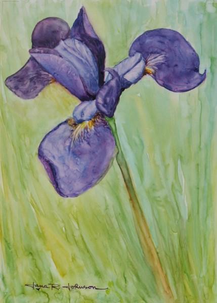 """Garland's Iris"" original fine art by Jana Johnson"