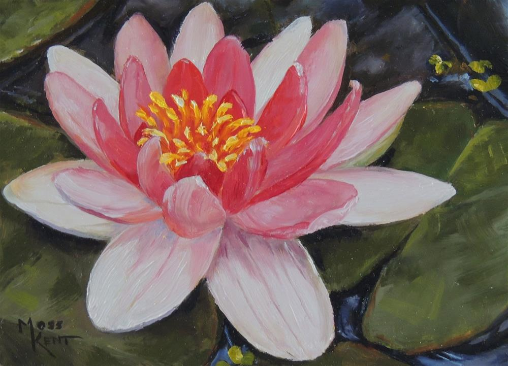 """Lilypad"" original fine art by Moss Kent"