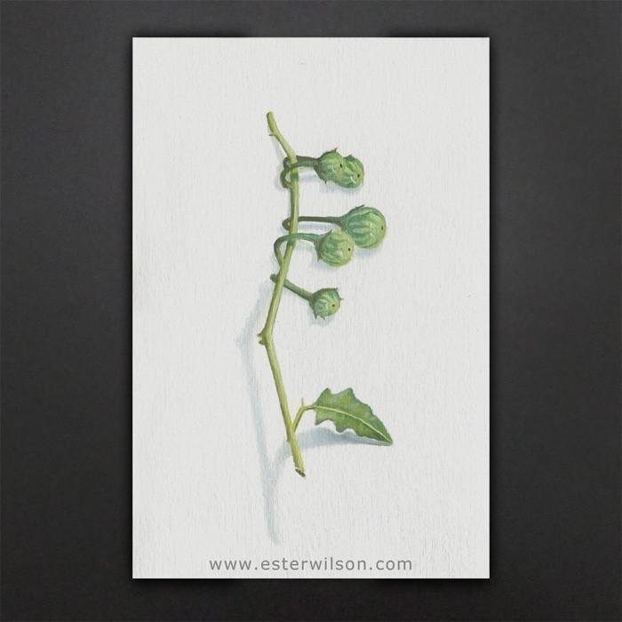 """Fruit"" original fine art by Ester Wilson"