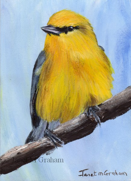 """Blue Winged Warbler ACEO"" original fine art by Janet Graham"